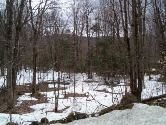 MOUNT HOLLY VTLAND  for sale $$45,000 | 3.02 Acres  | Price Per Acre $0