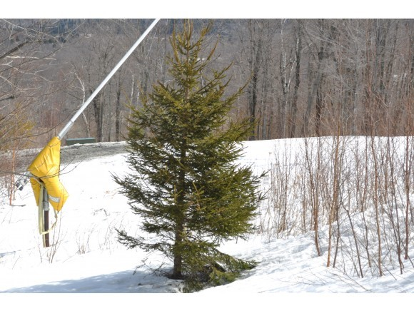 Mount-Snow-Real-Estate-4345536-2