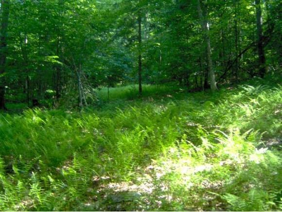 RANDOLPH VT LAND  for sale $$55,000 | 5 Acres  | Price Per Acre $11,000  | Total Lots 5