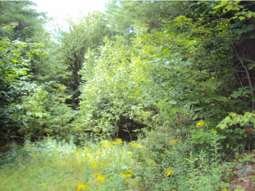 Newbury NH 03255 Land  for sale $List Price is $49,000