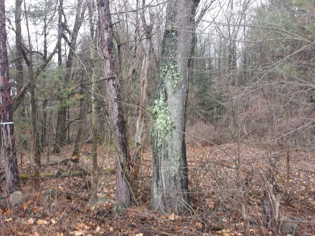 BOSCAWEN NH LAND  for sale $$89,900 | 48.96 Acres  | Price Per Acre $1,940