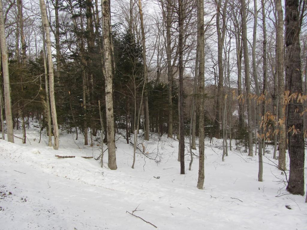 Mount-Snow-Real-Estate-4469164-5