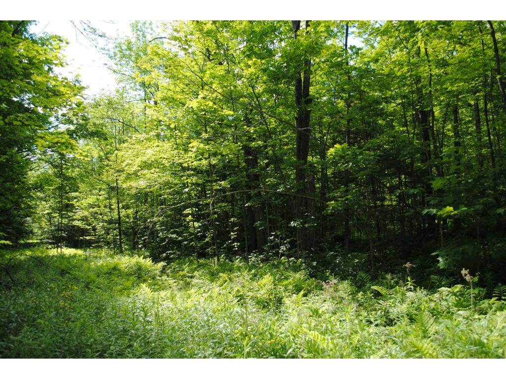 Motivated sellers! Great price for 1.03 acre lot...