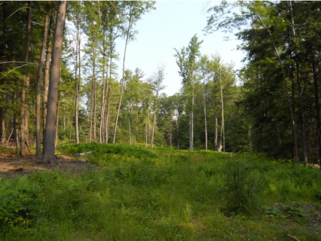 WESTMINSTER VT LAND  for sale $$75,000 | 30 Acres  | Price Per Acre $2,500  | Total Lots 2