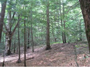 WESTMINSTER VT LAND  for sale $$49,000 | 10 Acres  | Price Per Acre $4,900