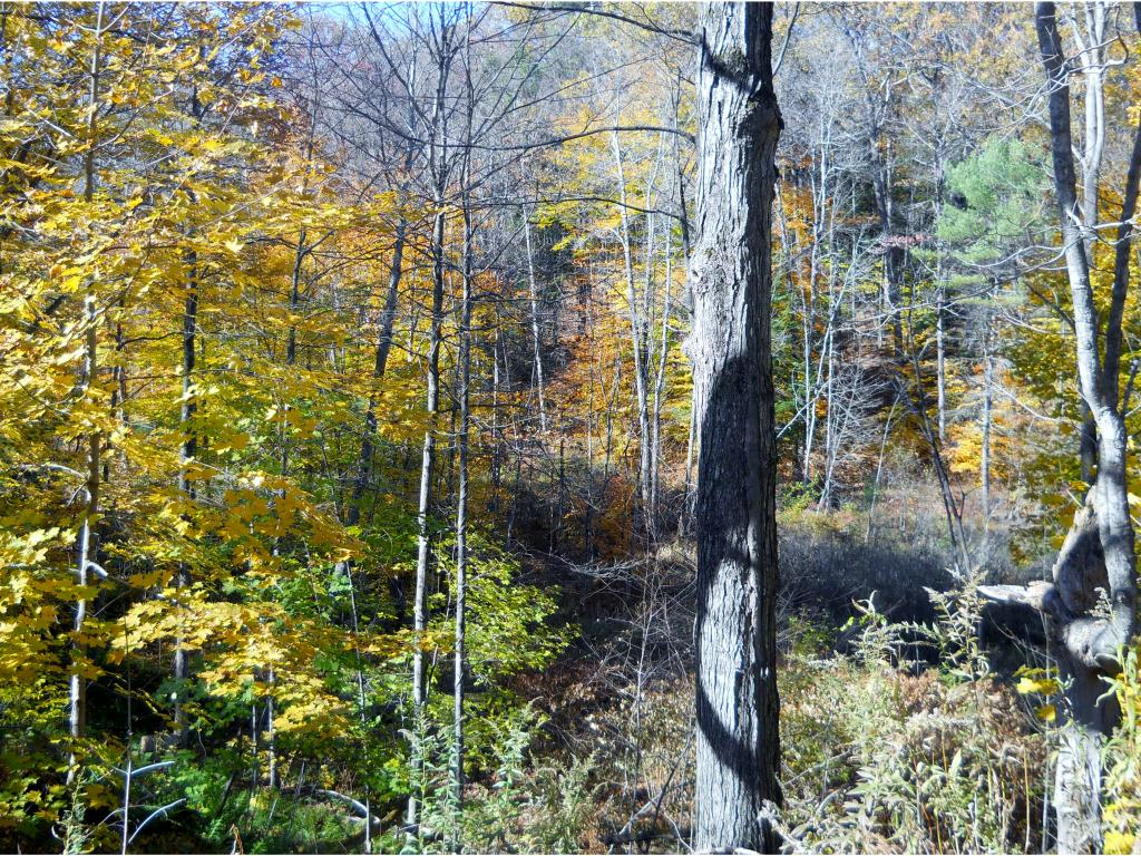 CORNISH NH Land  for sale $$25,000 | 4 Acres  | Price Per Acre $6,250