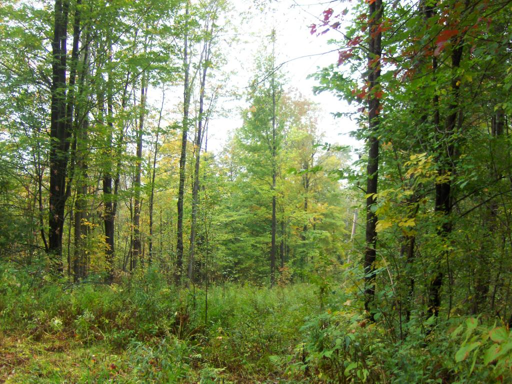 Two parcels available... this 21 acres for...