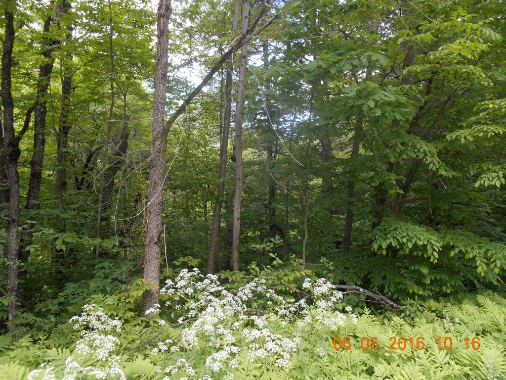 UNITY NH LAND  for sale $$55,000 | 29 Acres  | Price Per Acre $1,896