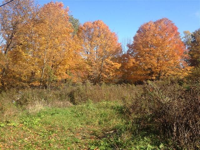 WALLINGFORD VT LAND  for sale $$80,000 | 11.26 Acres  | Price Per Acre $0