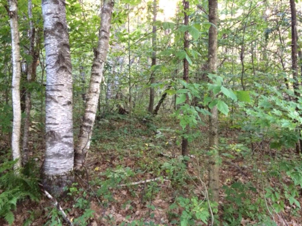 Hanover NH Land for sale