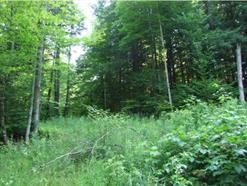 Private wooded lot in desirable neighborhood.  Long road frontage, approx. 1000'.Woods road to access.  Views with clearing.  Old family woodlot with managed growth.  Abutting lot is beautiful pasture, pherhaps this could be too!  Priced low enough to allow for clearing and solar.  Power 2/10ths of a mile away and requires an easement.  Solar would be the way to go!