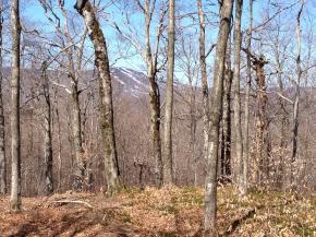 Mount-Snow-Real-Estate-4619231-3