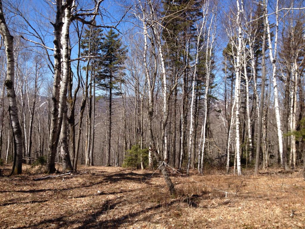 Mount-Snow-Real-Estate-4619244-3