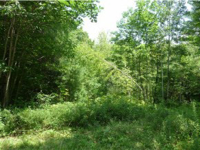 Newbury NH 03255 Land  for sale $List Price is $16,250