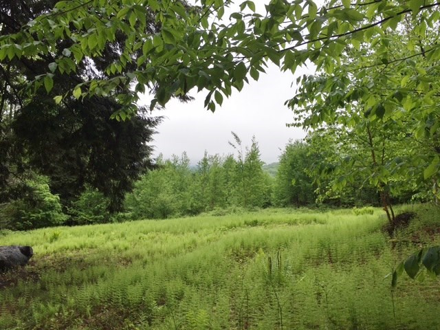 SPRINGFIELD VT LAND  for sale $$54,900 | 4.49 Acres  | Price Per Acre $0  | Total Lots 13