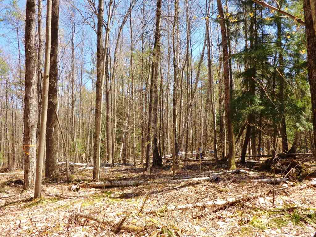 VILLAGE OF ETNA IN TOWN OF HANOVER NH Land  for sale $$129,000 | 3.61 Acres  | Price Per Acre $0