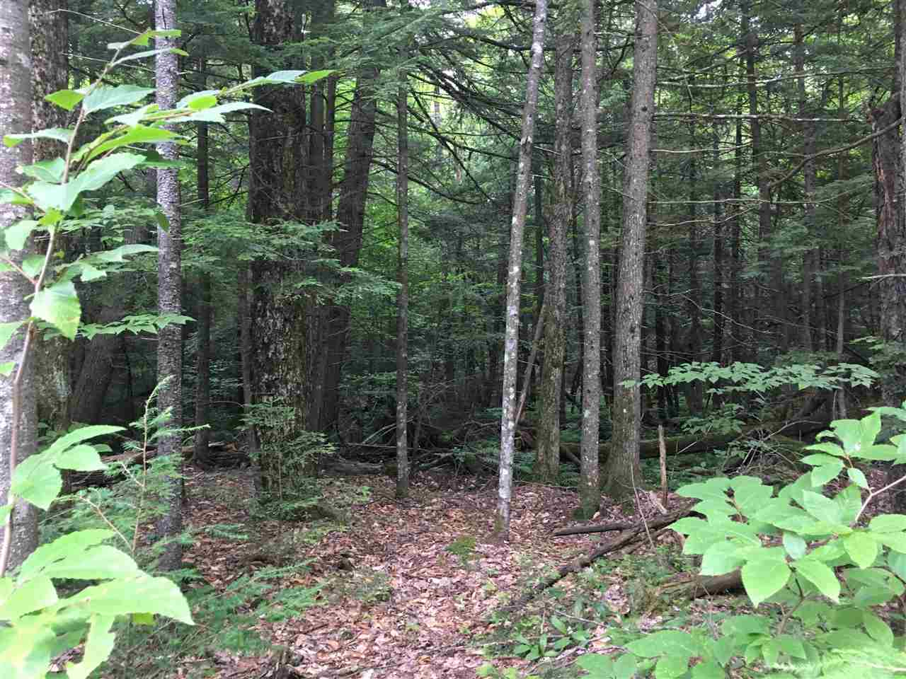 Nicely wooded 2 acres of mostly level land...