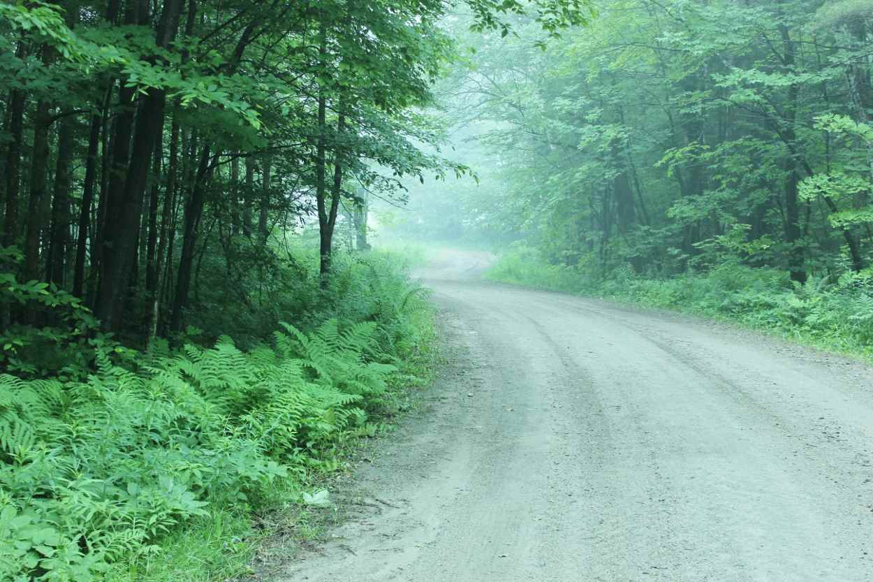 Almost at the end of a quiet road in the Timber...