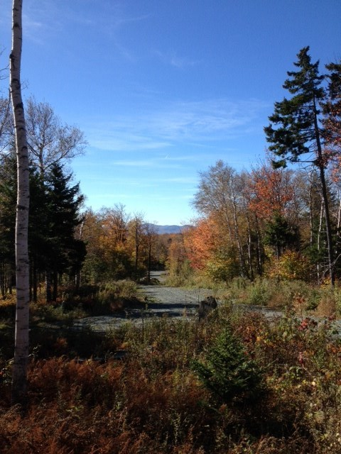 11+ acres of gently sloping land with incredible...