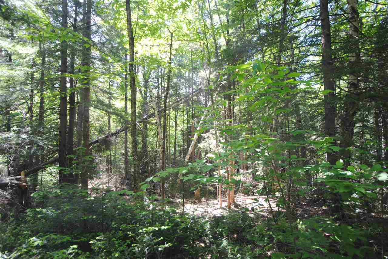 Wooded lot with 2.3 acres perfect for building in...