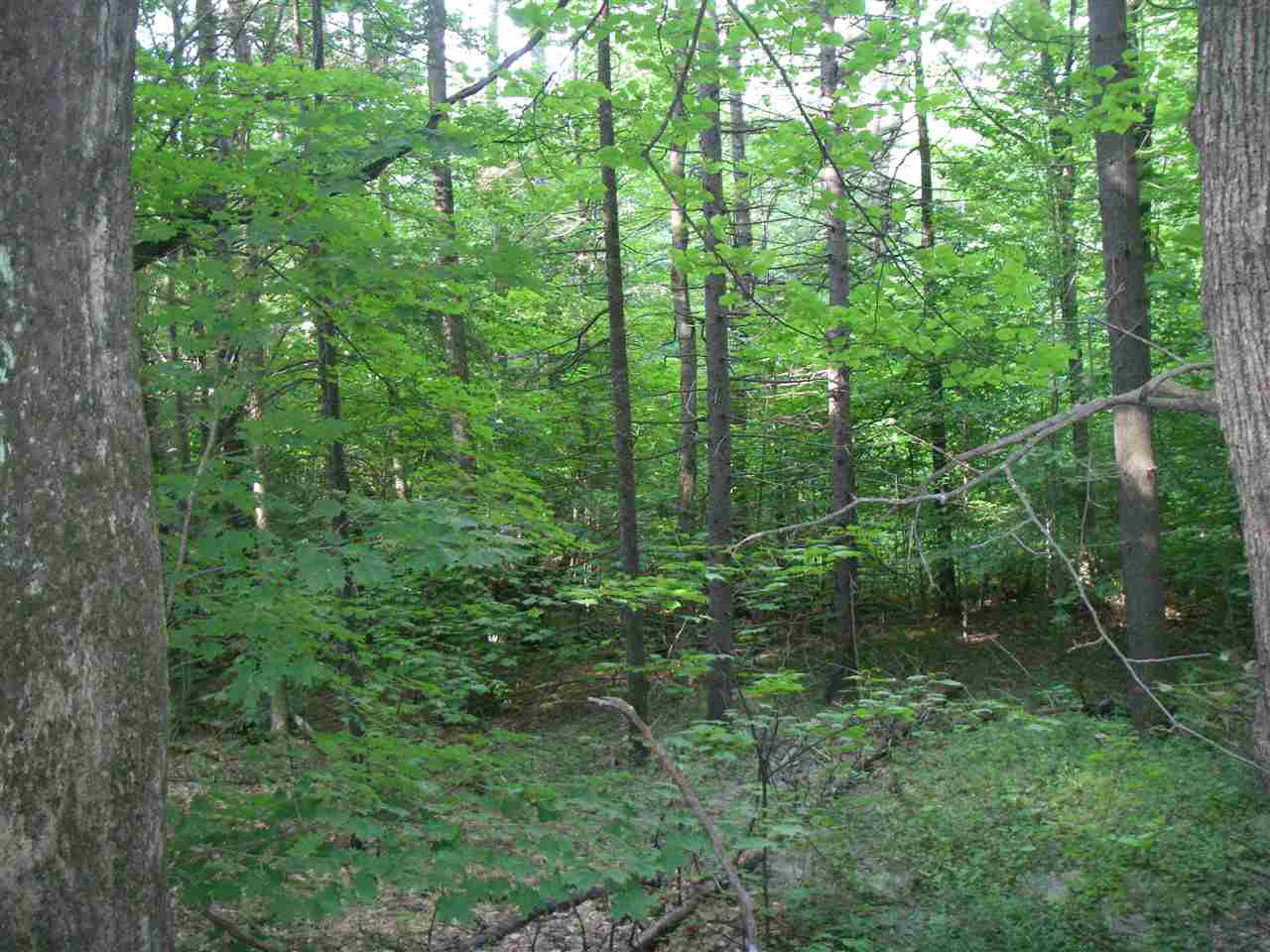 Beautiful wooded acreage, consisting of three...