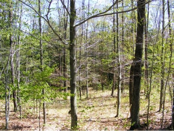Nice lot on Newfane Hill. Land is gently sloping...
