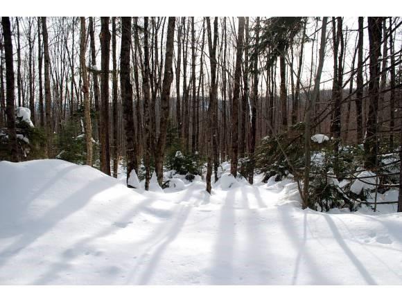 311 Woods