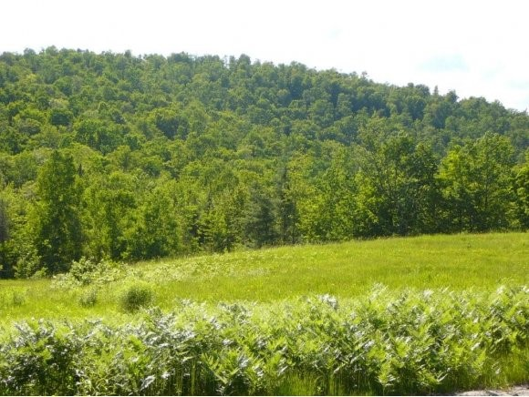 DORCHESTER NH LAND  for sale $$64,900 | 9.75 Acres  | Price Per Acre $6,656  | Total Lots 2