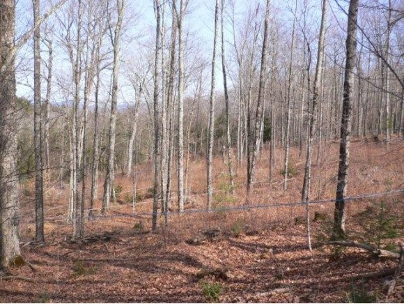BRADFORD VT Land  for sale $$35,000 | 14 Acres  | Price Per Acre $2,500