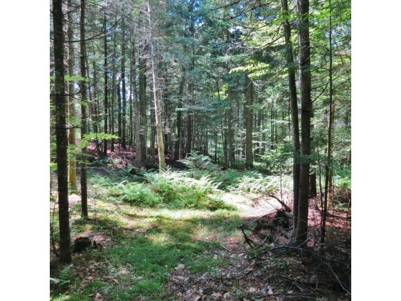 Village of Proctorsville in Town of Cavendish VT Land  for sale $List Price is $69,000