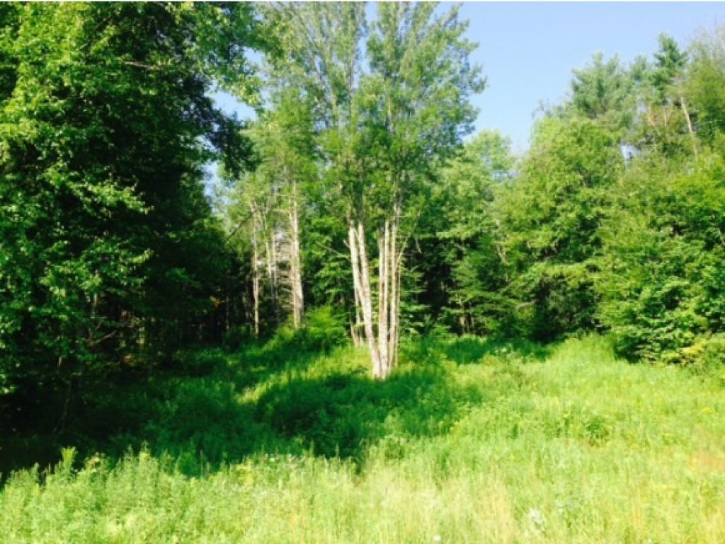 CLAREMONT NH LAND  for sale $$24,900 | 1.99 Acres  | Price Per Acre $16,532