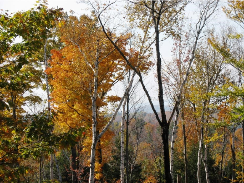 LEBANON NH LAND  for sale $$179,000 | 6.5 Acres  | Price Per Acre $30,615