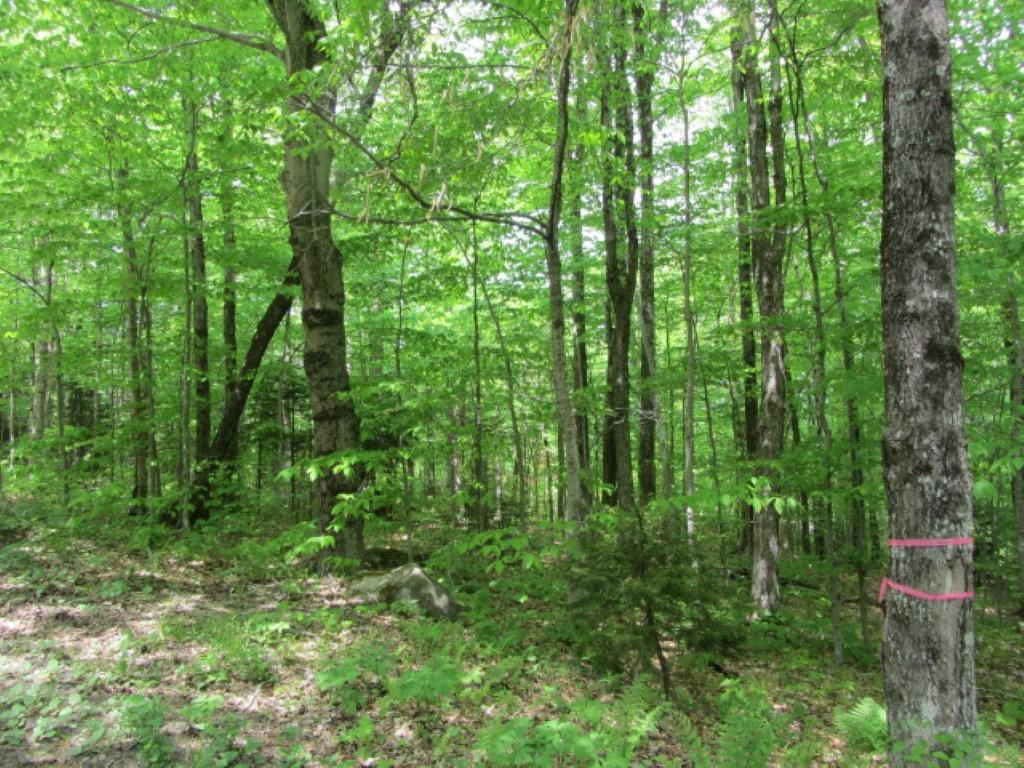 WILMINGTON VT LAND  for sale $$150,000 | 1.01 Acres  | Price Per Acre $0