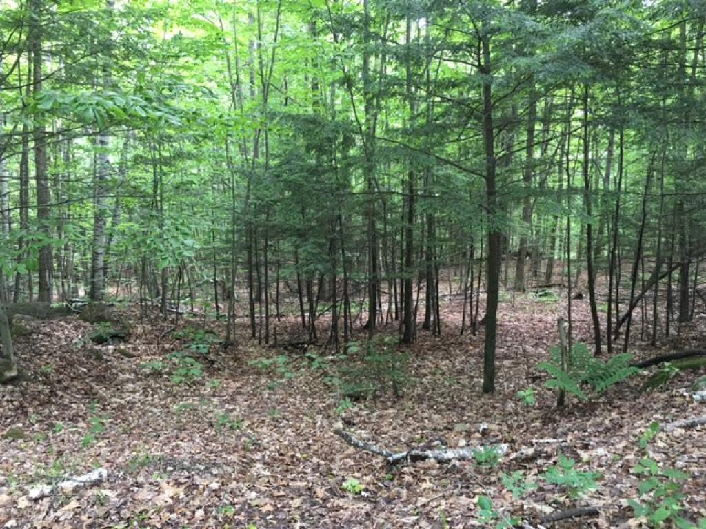 Weathersfield VT 05151Land for sale $List Price is $40,500