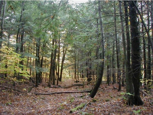 CANAAN NH LAND  for sale $$33,900 | 7.69 Acres  | Price Per Acre $0