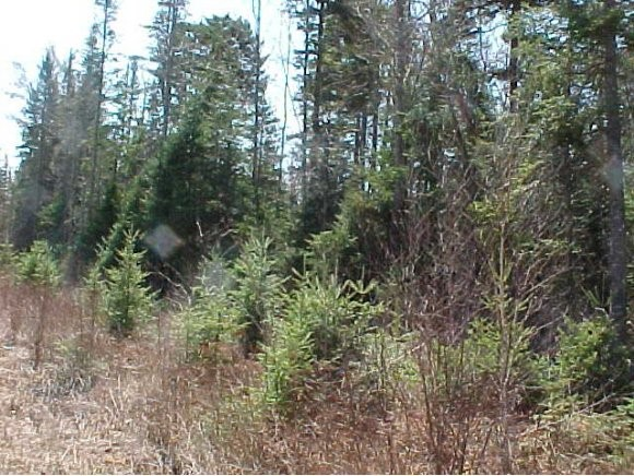 GRAFTON NH LAND  for sale $$175,000 | 99.2 Acres  | Price Per Acre $0