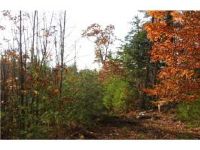 NEW DURHAM NH  LAND  for sale $29,900