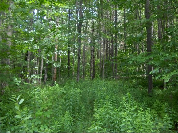 RANDOLPH VT LAND  for sale $$49,900 | 10.24 Acres  | Price Per Acre $0  | Total Lots 5