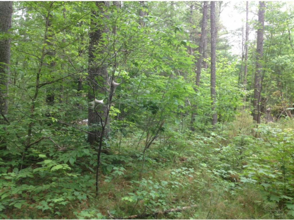VILLAGE OF EAST WAKEFIELD IN TOWN OF WAKEFIELD NH  LAND  for sale $75,000