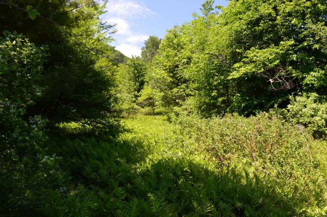 RANDOLPH VT LAND  for sale $$49,900 | 38 Acres  | Price Per Acre $0  | Total Lots 5