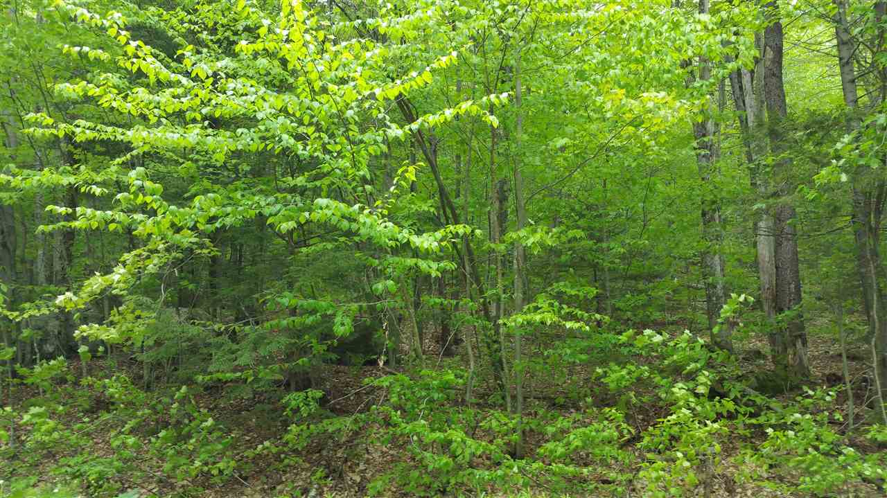 READSBORO VT LAND  for sale $$7,900 | 1.20 Acres  | Price Per Acre $0