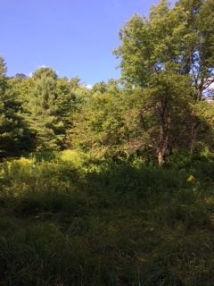 West Windsor VT 05037 Land for sale $List Price is $69,000