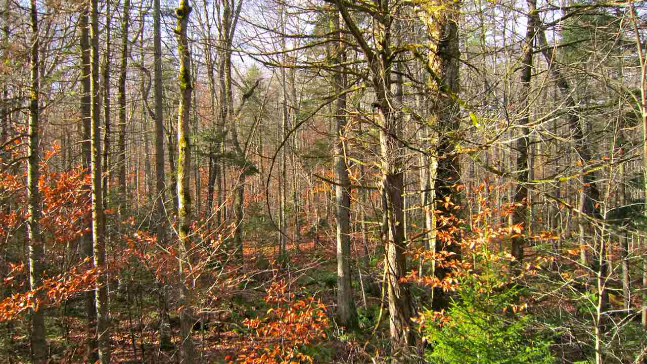 PLYMOUTH VTLAND  for sale $$4,900 | 1.61 Acres  | Price Per Acre $0