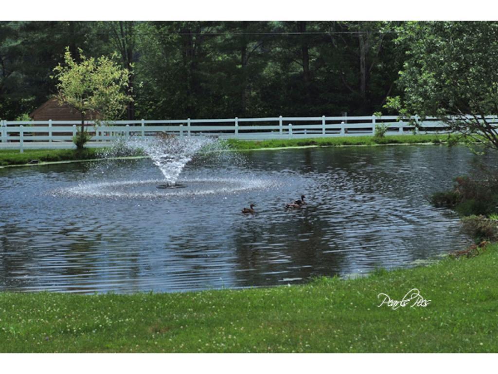 Wildlife pond 11232360
