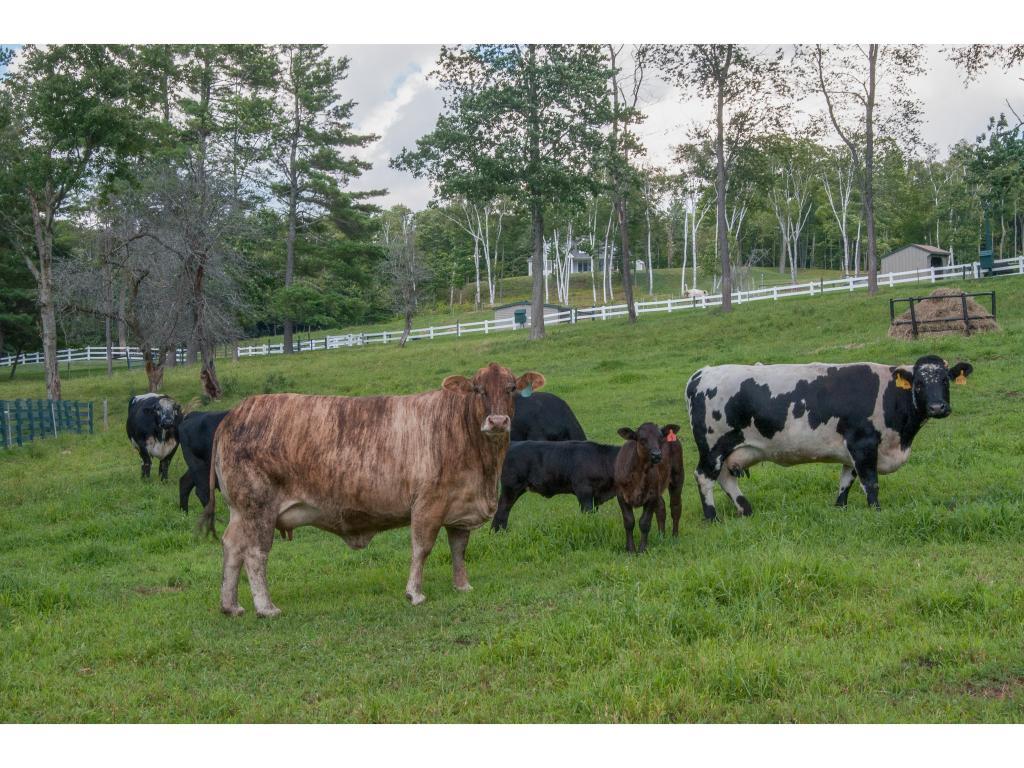 Livestock 11232387