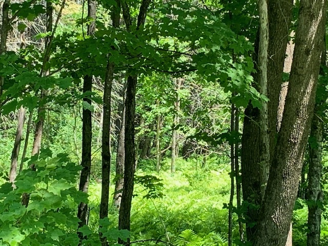 Woodstock VT Land  for sale $List Price is $125,000