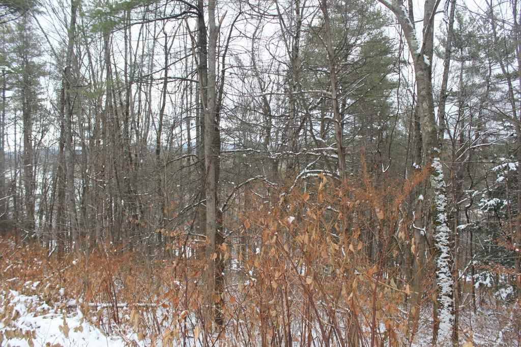 Springfield VT Land  for sale $List Price is $79,900