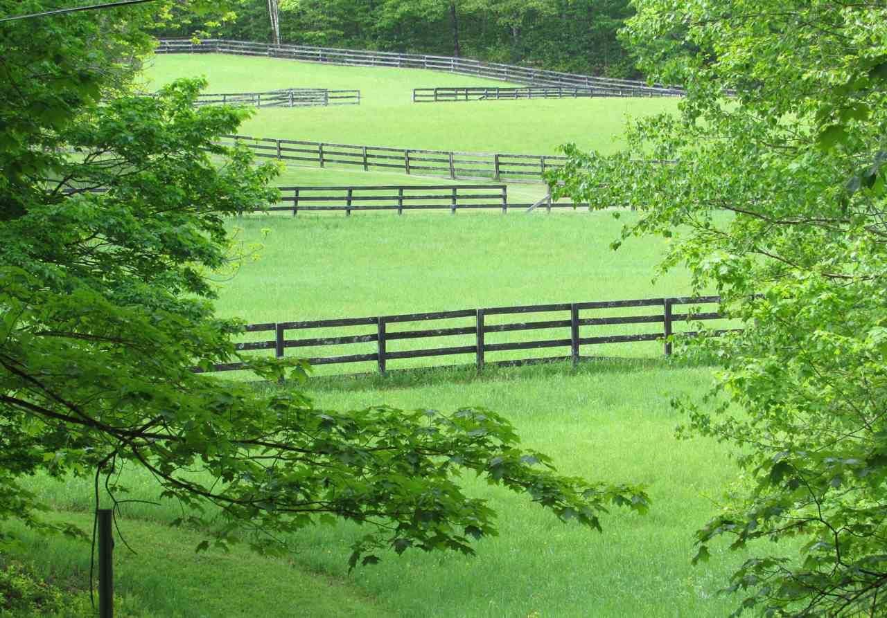 Fenced Pastures 11390019
