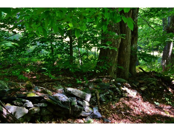 Old stone walls in woodland 11425756