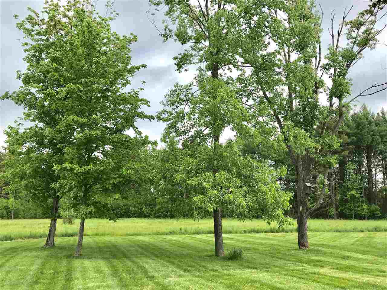 Lot of open space with mature trees 12031578